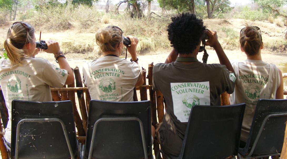 Fyra gruppvolontärer spanar efter vilda djur i Botswana med kikare under deras volontärresa.